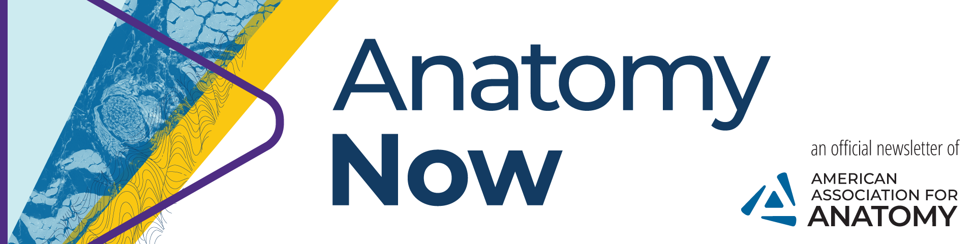 Anatomy Now header