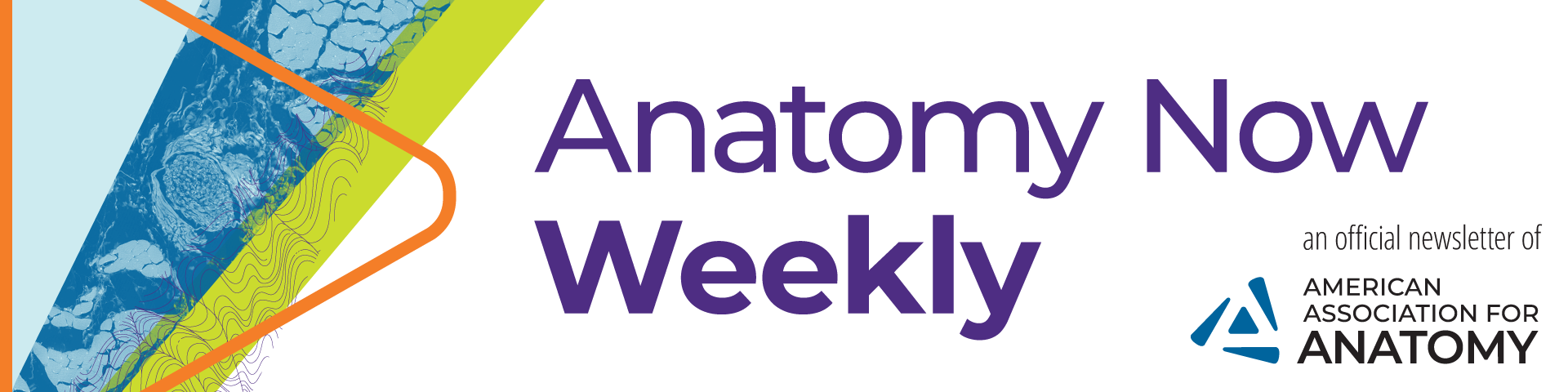 Anatomy Now Weekly header